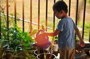 Blog Watering Can